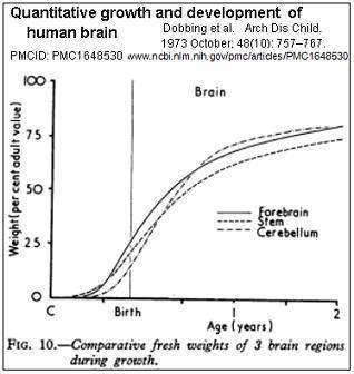 braingrowthspurtJ.jpg